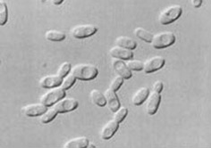 I Microrganismi EM®