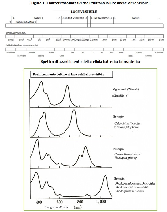 Dr. Teruo Higa: Effetto e Efficacia Batteri Fotosintetici...