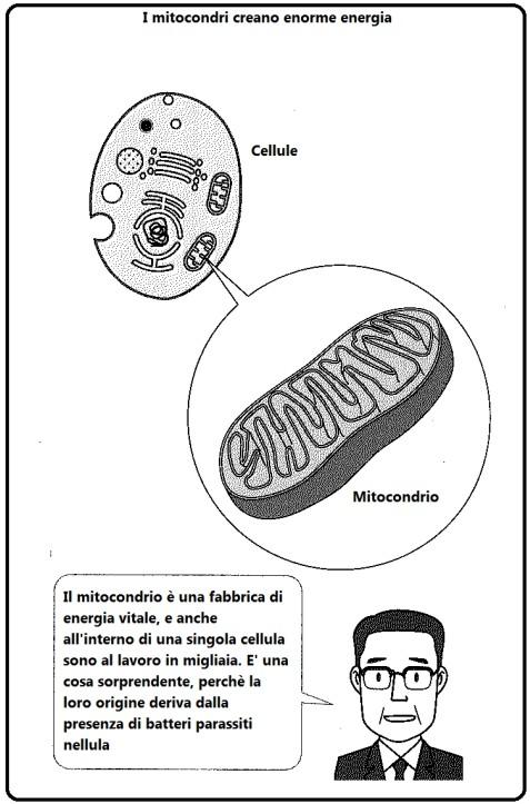 Prof. Abo: L'antenato del sistema mitocondriale è il batterio.