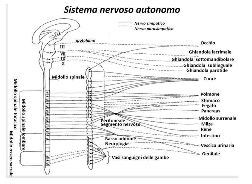 Dr. Morishita e meccanismo di guarigione naturale.
