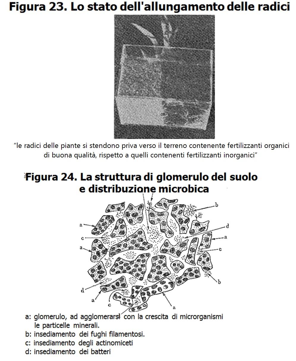 Allungamento delle Radici e Rizosfera